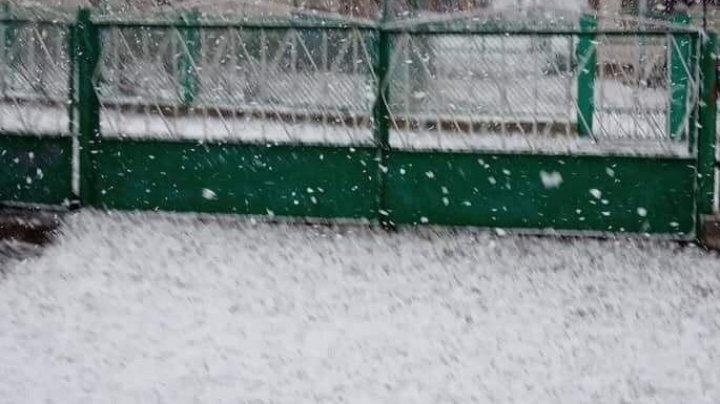 NINGE în nordul Moldovei. La Briceni, pământul a fost acoperit de zăpadă (VIDEO/FOTO)