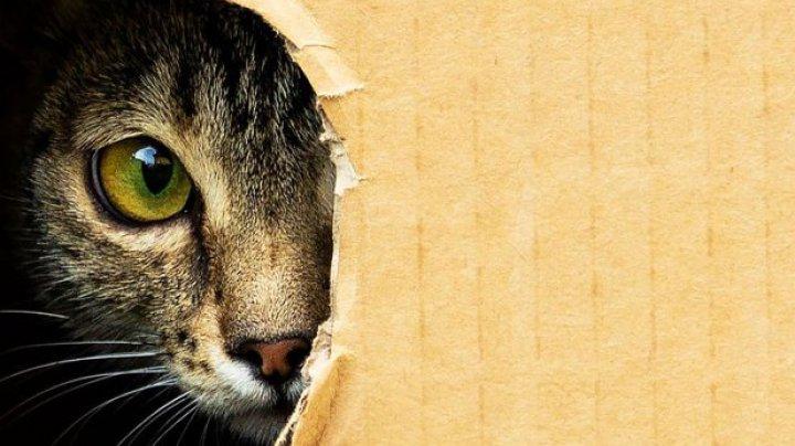 Prima pisică clonată din lume a împlinit 18 ani