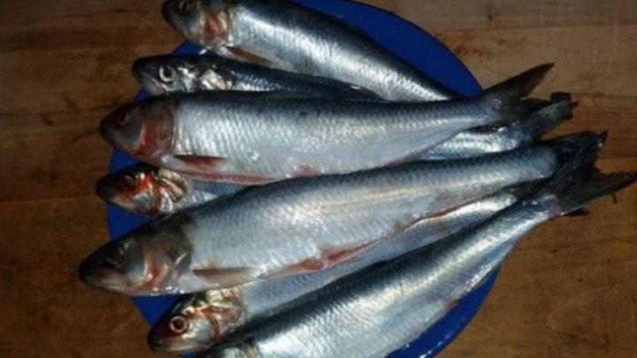 ESTE BINE SĂ ȘTII! Singurul peşte care îţi curăţă vasele de sânge de colesterol