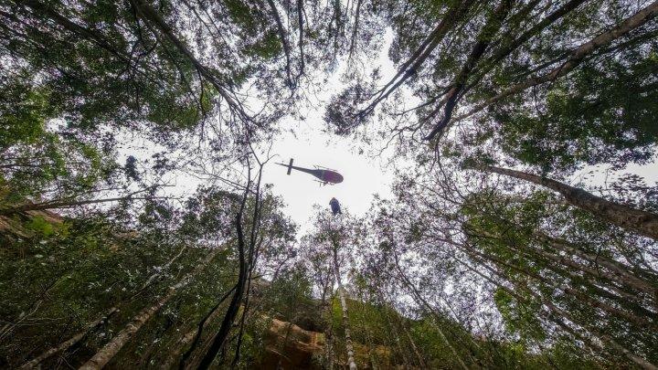 Salvatorii din Australia au avut o misiune secretă pentru a salva mai mulți arbori preistorici