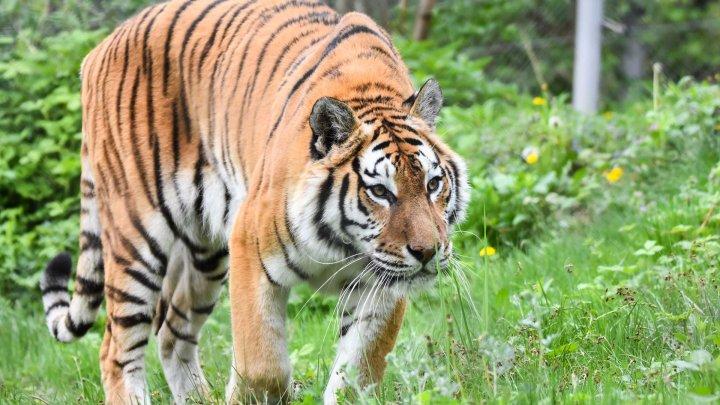Pe timp de carantină, animalele de la grădina zoologică din Guatemala se bucură de viață