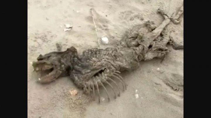 Un schelet ciudat a fost găsit pe o plajă în Melton Peter Demetre Park