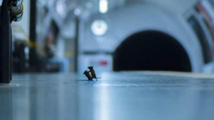"""Bătălia dintre doi șoareci pe un peron de metrou devine fotografia anului la secțiunea """"animale sălbatice"""""""
