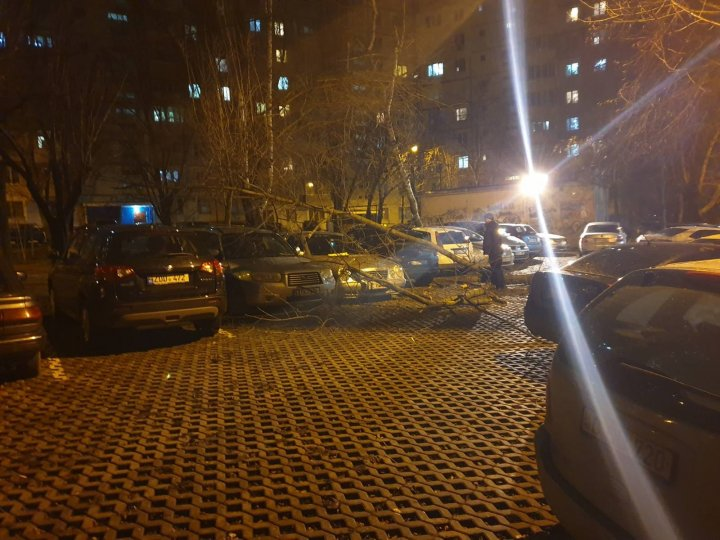 Vremea rea face ravagii în Capitală. Mai multe maşini, avariate după ce un copac a căzut peste ele (FOTO/VIDEO)