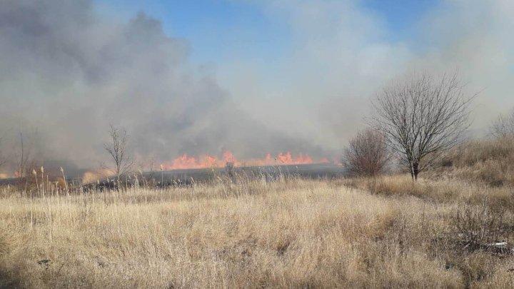 Peste 10 ha de vegetaţie au fost nimicite de flăcări în apropiere de oraşul Căuşeni (FOTO)