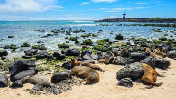 Vrei o altfel de VACANŢĂ? TOPUL destinaţiilor în care turiştii pot admira animalele sălbatice în habitatul natural