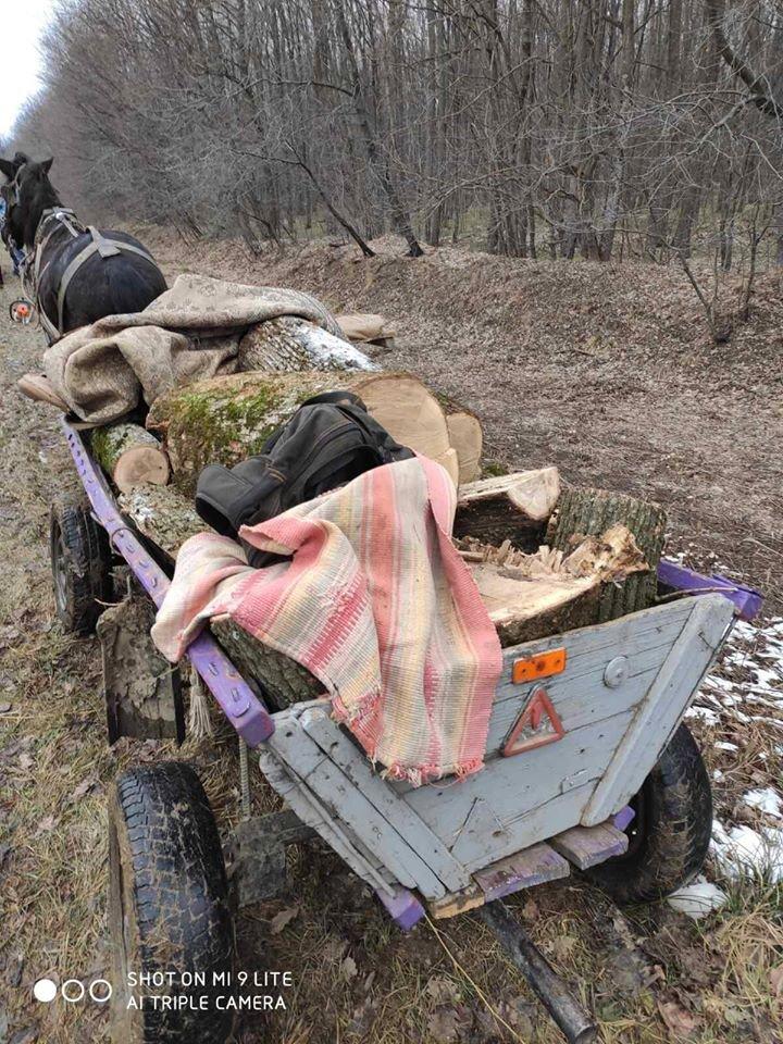 RAZII în raionul Călăraşi. Patru bărbaţi, AMENDAŢI pentru tăieri ilicite de copaci (FOTO)
