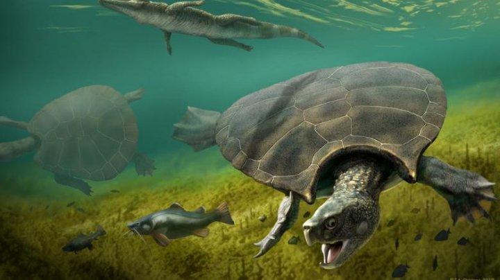 Cea mai mare broască țestoasă din lume era cât o mașină, avea coarne și mânca crocodili