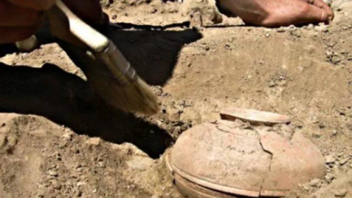 Au dezgropat o oală veche de 800 de ani, plină cu seminţe. Au rămas UIMIŢI când au văzut ce a răsărit