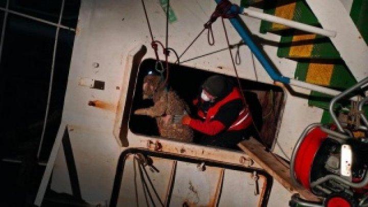 Epava cu oi moarte scufundată în Portul Midia, adusă marți seară la cheu
