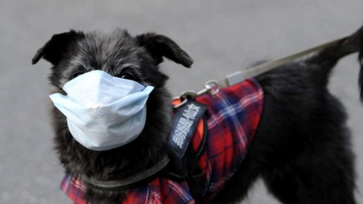 Speriaţi de VIRUSUL UCIGAŞ, chinezii le pun măști animalelor de companie