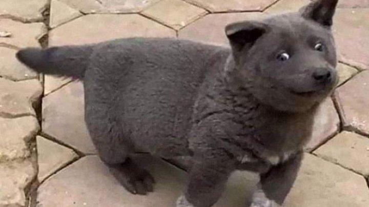 Câine sau pisică? Un animal de companie simpatic a împărțit în două Internetul (FOTO)