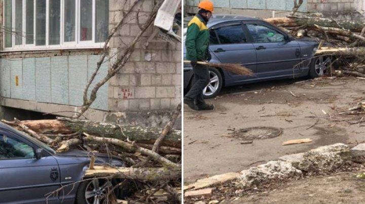 PRĂPĂD în Capitală din cauza FURTUNII: Copaci doborâți, panouri căzute, acoperișuri luate de vânt. Cetăţenii, îndemnaţi să fie PRUDENŢI