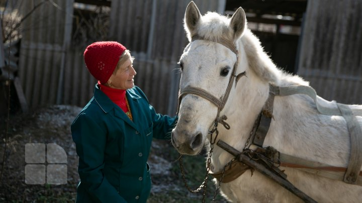 Povestea tristă al unui cal, care a slujit toată viaţa sa la gimnaziul din Căinarii Vechi: Ar putea ajunge la abator (FOTO)