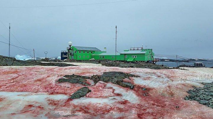 Fenomen neobişnuit. Zăpada din Antarctica a devenit roșie