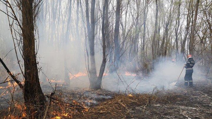 Incendiu de proporții la granița dintre Republica Moldova și România. Zeci de pompieri luptă cu flăcările de aproape 24 ore (FOTO)