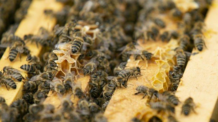Apicultorii au început pregătirile pentru sezonul de polenizare (FOTOREPORT)