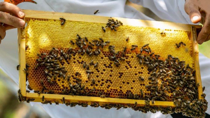 Văduvă și cu trei copii: Povestea de viaţă a Marianei Focşa, una dintre puţinele apicultoare din ţara noastră