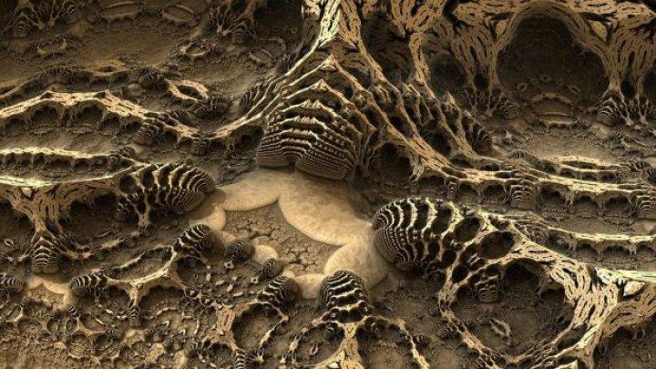 Cum arăta strămoșul tuturor ființelor? A trăit acum 555 de milioane de ani