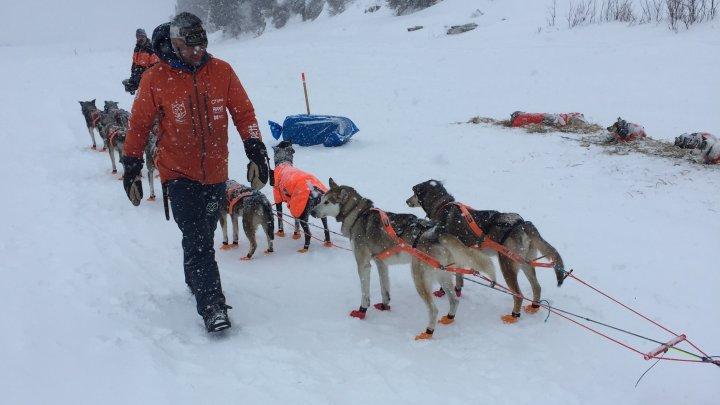 Thomas Waerner, câștigătorul concursul Iditarod Trail Sled Dog Race