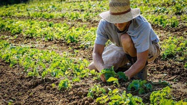 Germania va permite muncitorilor străini să intre în ţară şi să ajute la lucrările agricole