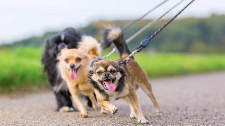China scoate pentru prima oară câinii și pisicile de pe lista animalelor comestibile