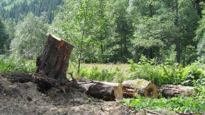 DATE ALARMANTE: În ultimele două decenii, planeta a pierdut circa 100 de milioane de hectare de pădure