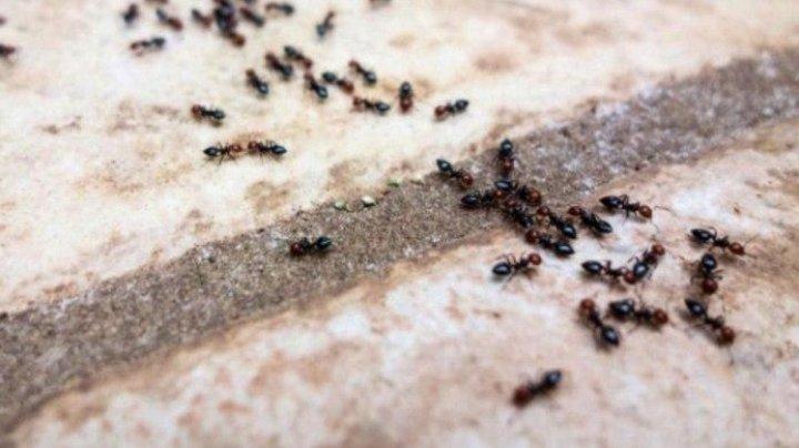 Trucuri simple care te ajută să scapi de furnicile din casă (VIDEO)