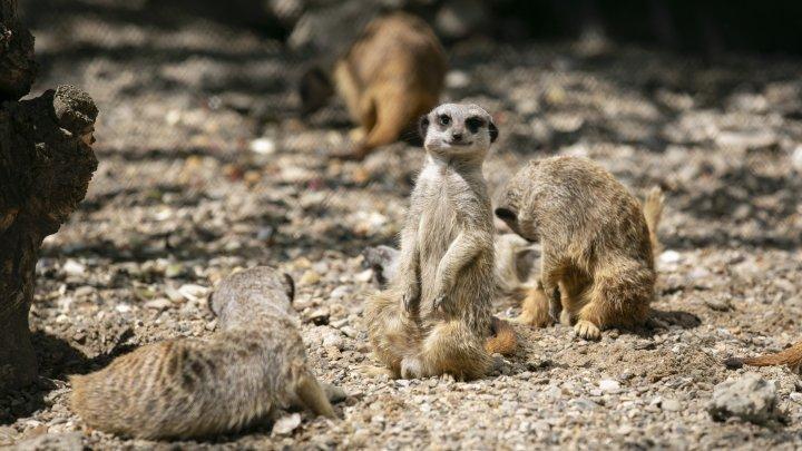 Grădina Zoologică din Capitală și-a redeschis ușile chiar de Ziua Copiilor (FOTOREPORT)