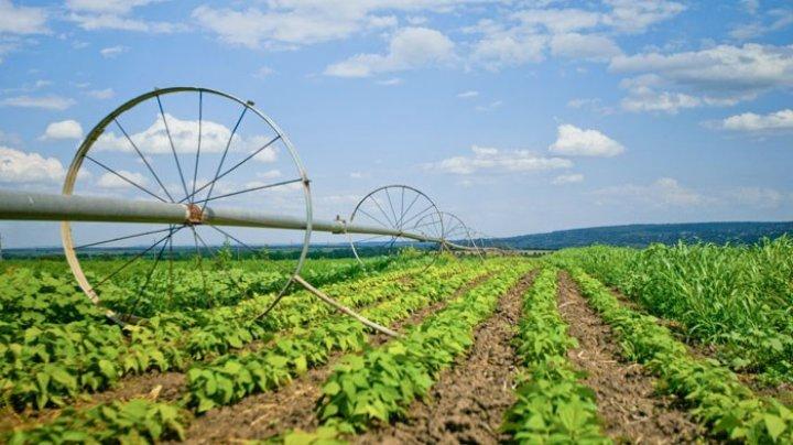 Guvernul va aloca bani pentru restabilirea sistemlui de irigare în raioanele Ștefan Vodă și Căușeni
