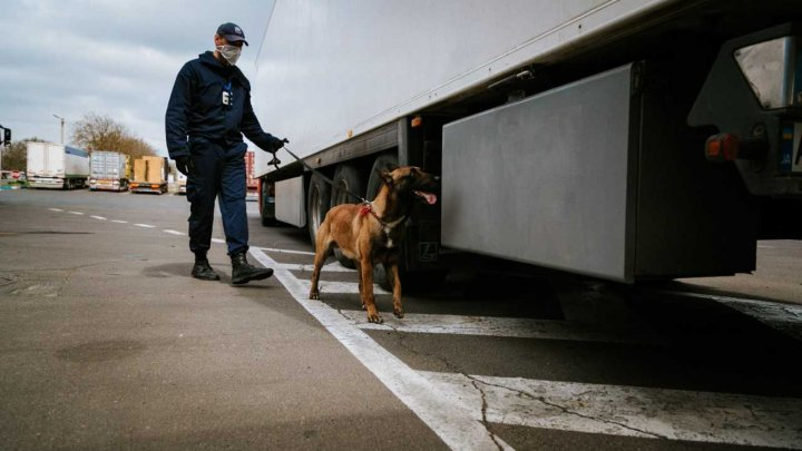 Pe timp de pandemie, șapte cazuri de trafic ilicit de bunuri la vamă timp de o săptămână