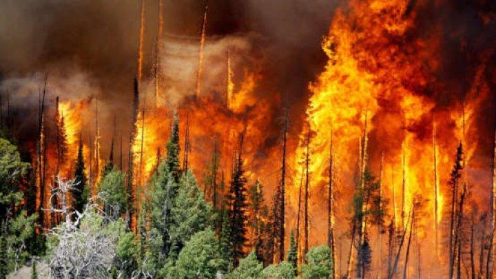 SUA: Incendiile de vegetaţie fac ravagii în statul Colorado, afectat de secetă