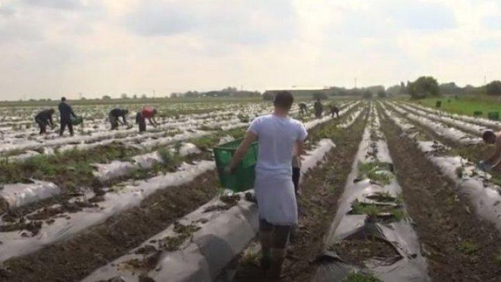 Germania îşi deschide graniţele pentru muncitorii sezonieri. Noile reguli de muncă