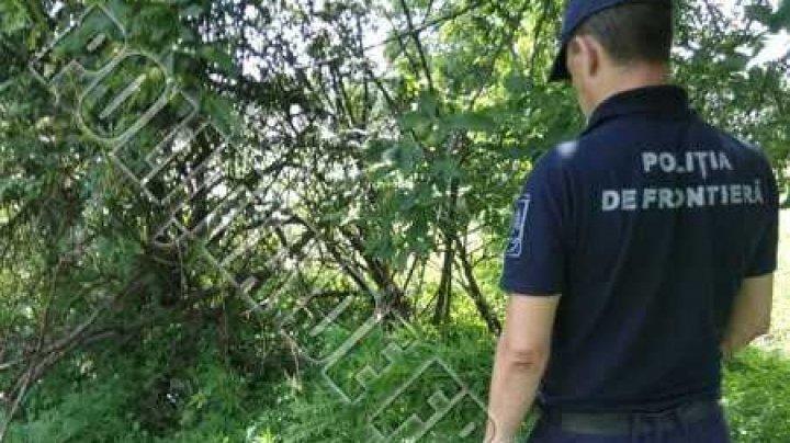 Mai multe lanuri de cânepă, descoperite în apropiere de frontiera de stat