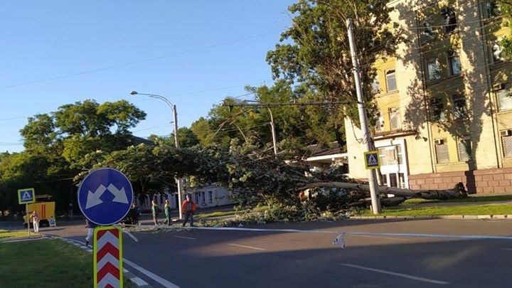 Incident pe bulevardul Iuri Gagarin din Capitală. Un copac a căzut pe carosabil (FOTO/VIDEO)