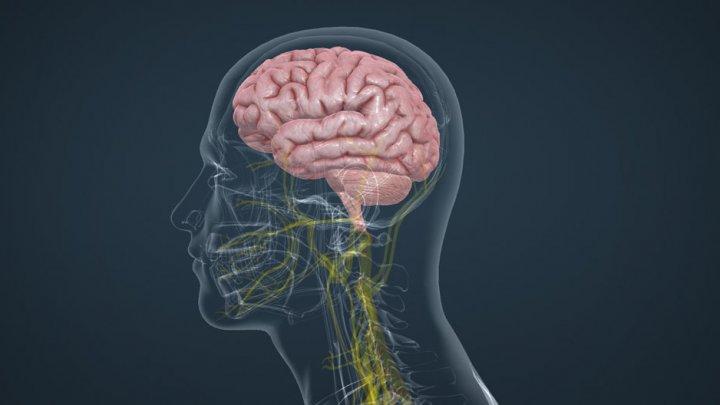 Creierul nostru ar folosi strategii similare unui motor de căutare pentru a-și aminti cuvinte