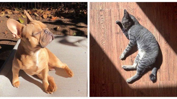 IMAGINI HAIOASE cu animale care se bucură de soare