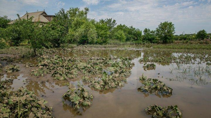 Consecințele ploilor torențiale din ultimele zile: Gospodării inundate, drumuri deteriorate şi culturi agricole distruse