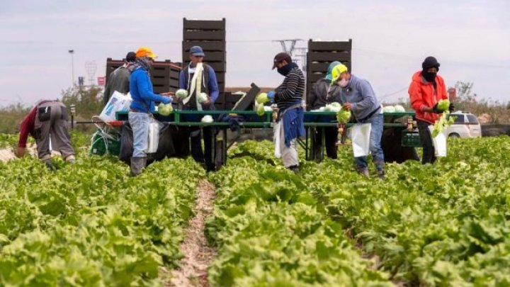 Focar de infecție la o fermă din Germania. 174 de muncitori, infectați cu coronavirus