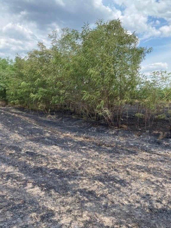 Incendiu violent la Donduşeni. Şapte hectare de grâu au ars (FOTO)