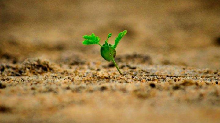Plantele pot trimite semnale electrice secrete pe sub pământ. Ce au aflat cercetătorii
