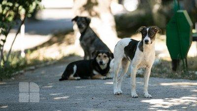 Câinii vagabonzi din Capitală vor fi număraţi de voluntari (FOTOREPORT)