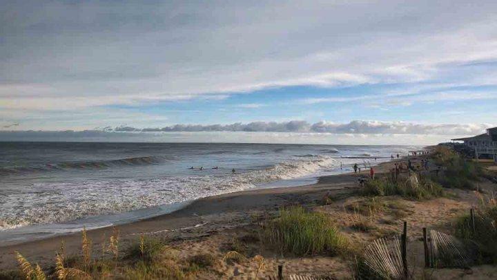 Creaturile marine, care au invadat plajele dintr-un stat american, în urma trecerii uraganului Isaias