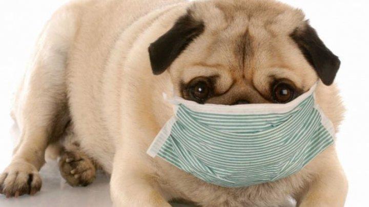 Studiu: Coronavirusul se poate transmite de la oameni la câini şi pisici
