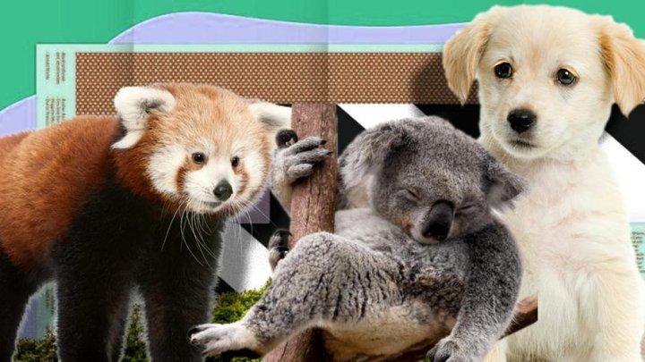 Top 10 cele mai adorabile animale din lume