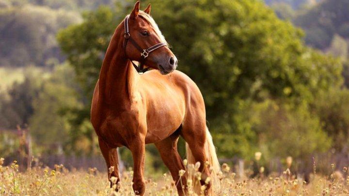 Acte de barbarism în Franța. Zeci de cai de rasă au fost mutilați și uciși