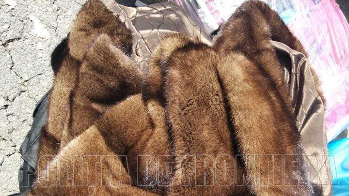 Blănuri în valoare de peste 120 de mii de lei, transportate ilegal cu autocarul