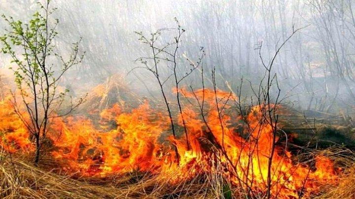 Moldova, în flăcări. 42 de incendii de vegetație în doar 24 de ore (FOTO)