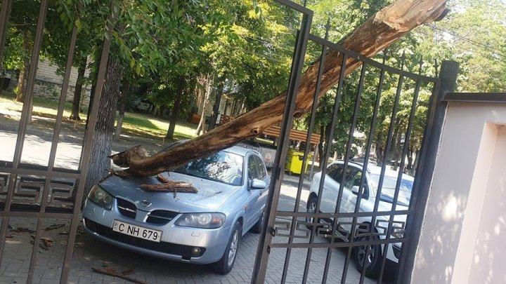 O creangă imensă a căzut peste un automobil, pe o stradă din Capitală (FOTO)