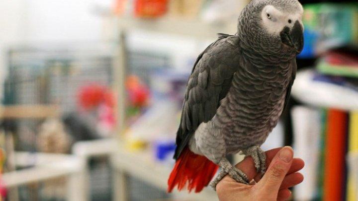 Cinci papagali africani au fost izolați la o grădină zoologică din Marea Britanie, pentru că  înjurau vizitatorii
